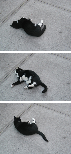 cat on sidewalk