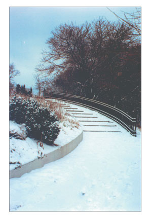 Snowy Steps In Park
