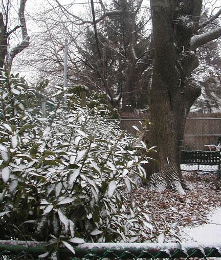 Marie's Leaves in Snow