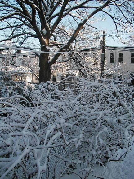Bay Ridge Backyard in Snow