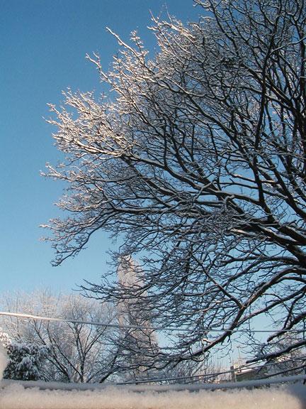 Bay Ridge Back Yard in Snow 2
