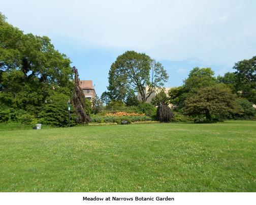 Meadow, Narrows Botanic Garden